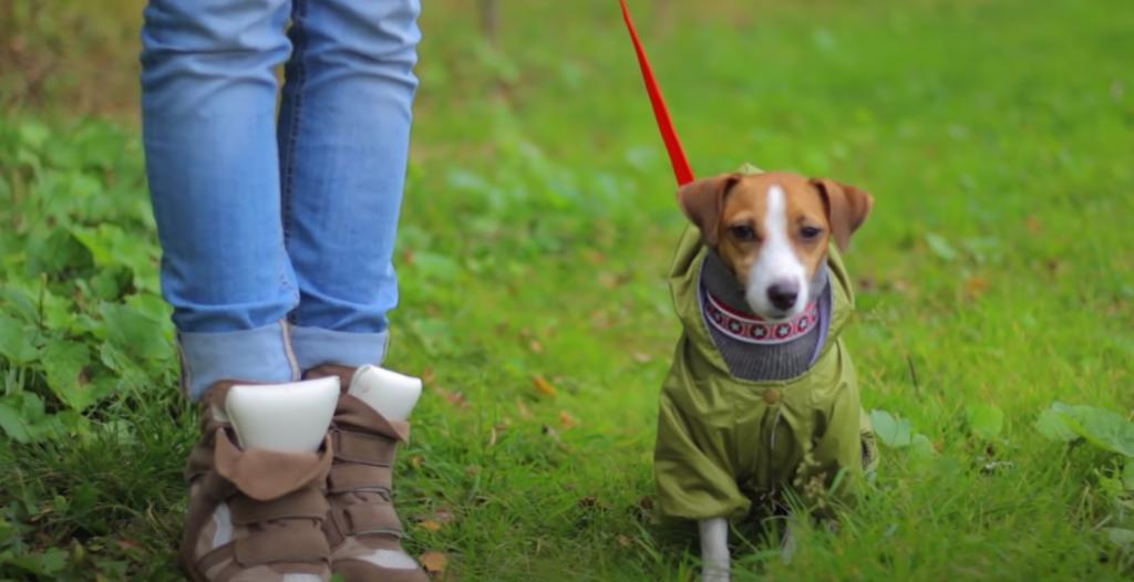 Warum sollte ein Hund regelmäßig Gassi gehen?
