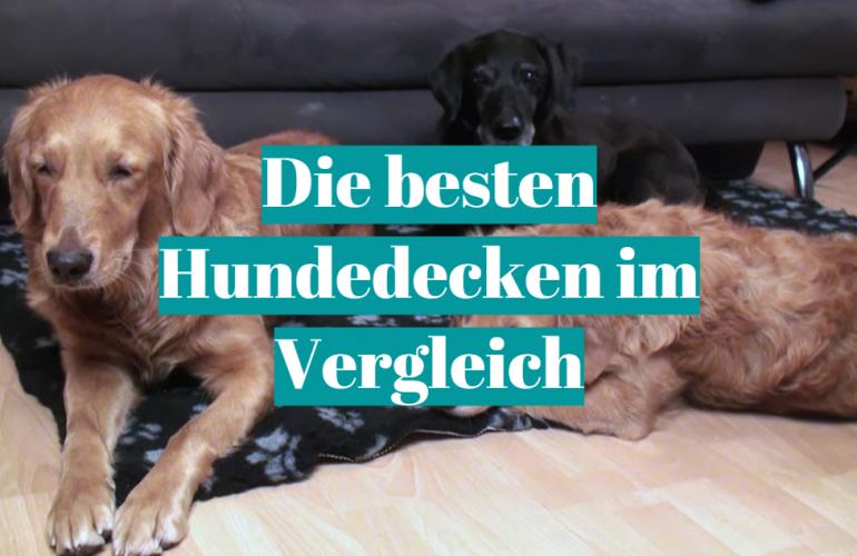 Hundedecke Test 2021: Die besten 5 Hundedecken im Vergleich