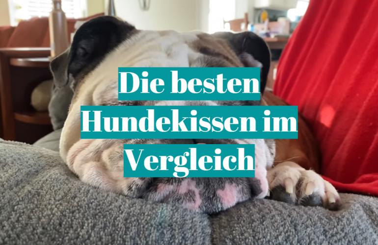 Hundekissen Test 2021: Die besten 5 Hundekissen im Vergleich