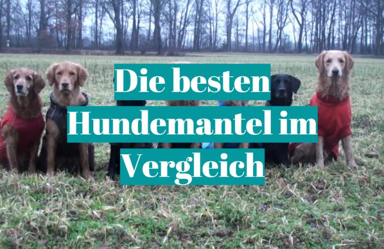 Hundemantel Test 2021: Die besten 5 Hundemantel im Vergleich
