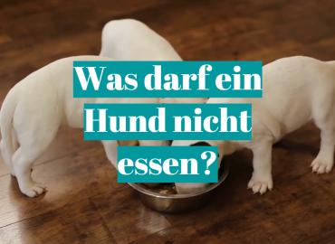 Was darf ein Hund nicht essen_