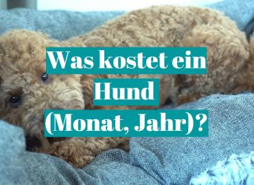 Was kostet ein Hund (Monat, Jahr)?