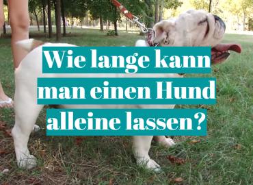 Wie lange kann man einen Hund alleine lassen_