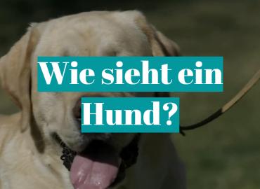 Wie sieht ein Hund?